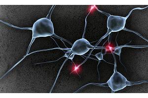 Нашли причину возникновения рассеянного склероза у человека